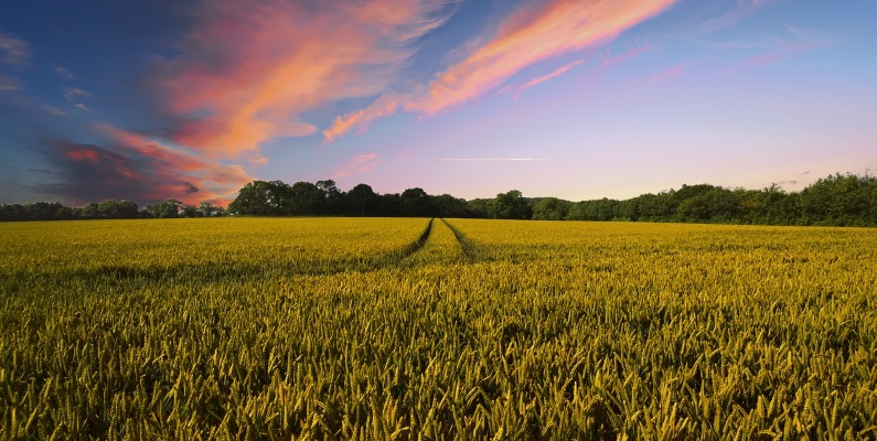 Gorgeous Farmland